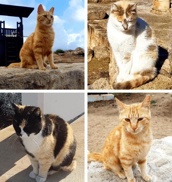 Ciprusi cicák
