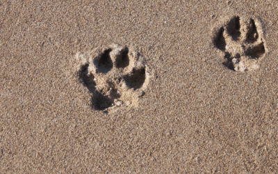 Ciprus, a macskák szigete