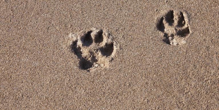 Macskák szigete Ciprus